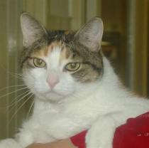 Bella – A Feline With Red Urine