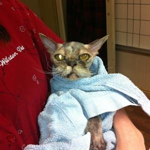 Cat bath small