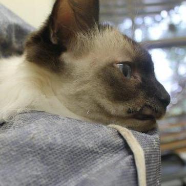Cat cuts- vet- herston