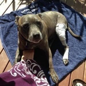 POM Stella bandage