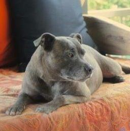 Stella- The Wonder Dog Walks Again