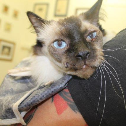 Sutured face- Cat Vet Newmarket
