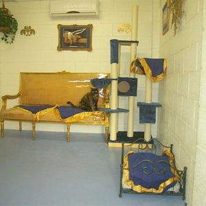 cattery-royal-suite1