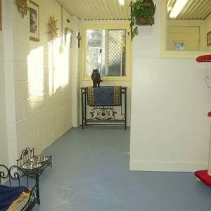 cattery-royal-suite3