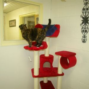 cattery-royal-suite4