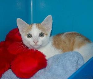 Cat Kennel Wilston Vet