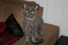 Monty – The Tale Of A Fat Cat