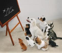 puppy school Brisbane Wilston Vet