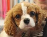 Rosie- A Nasty Dog Bite