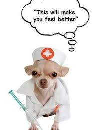 dog and cat vaccintions,Brisbane vet